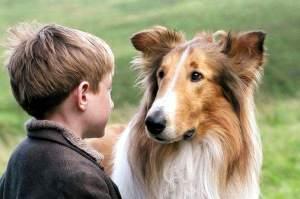 Lassie_2005_1
